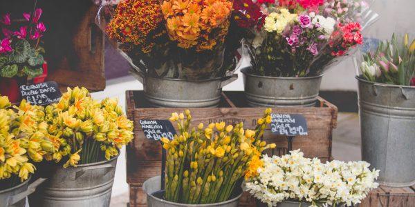 arrangement-bloom-blooming-977913
